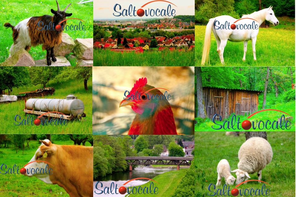 2015 Countrycollage